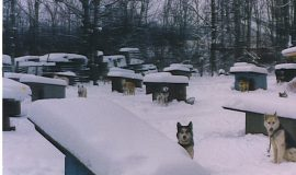 Dave Shaw's kennel in winter.